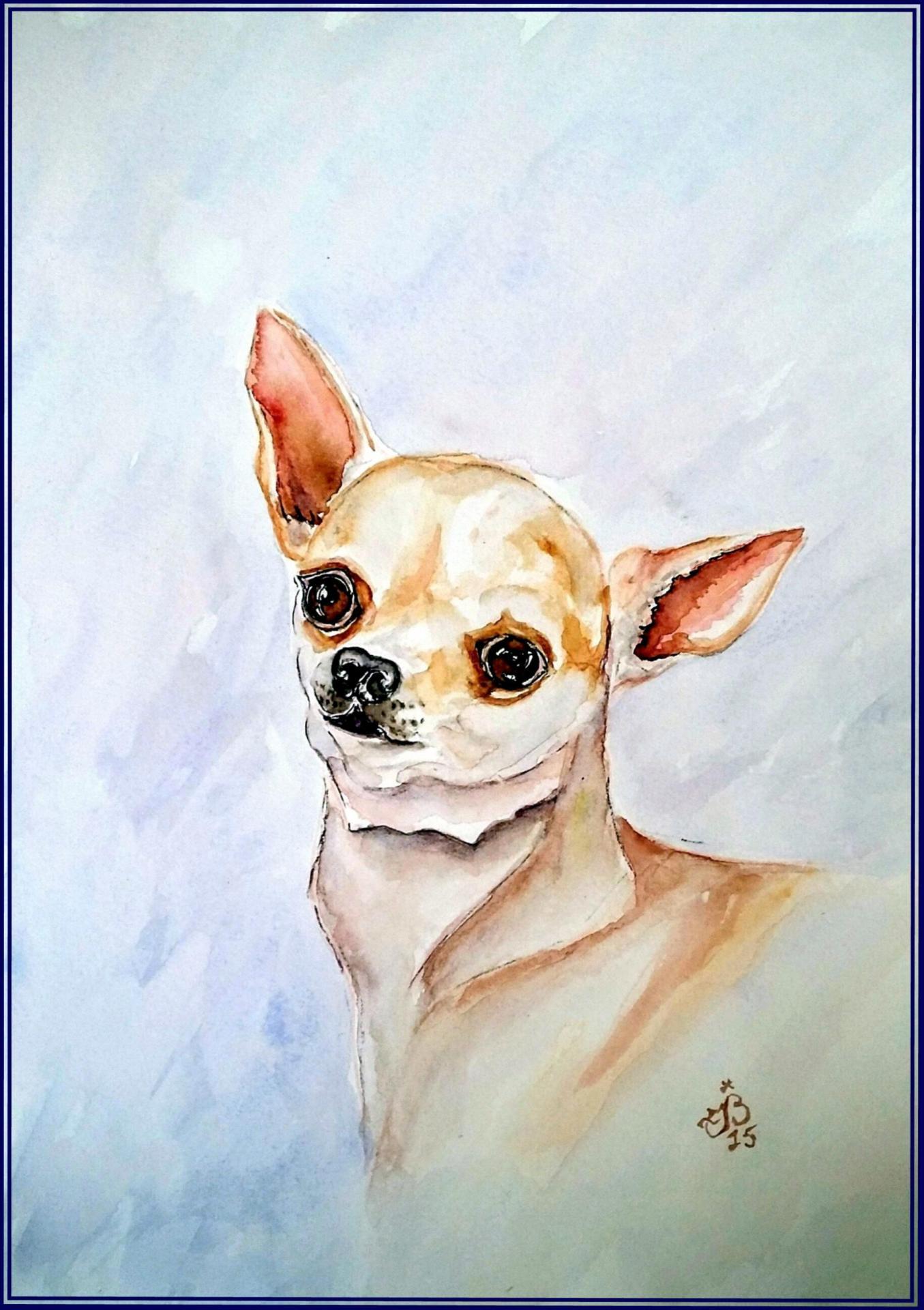 Chihuahua jmb 3