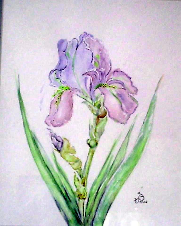 Iris étude