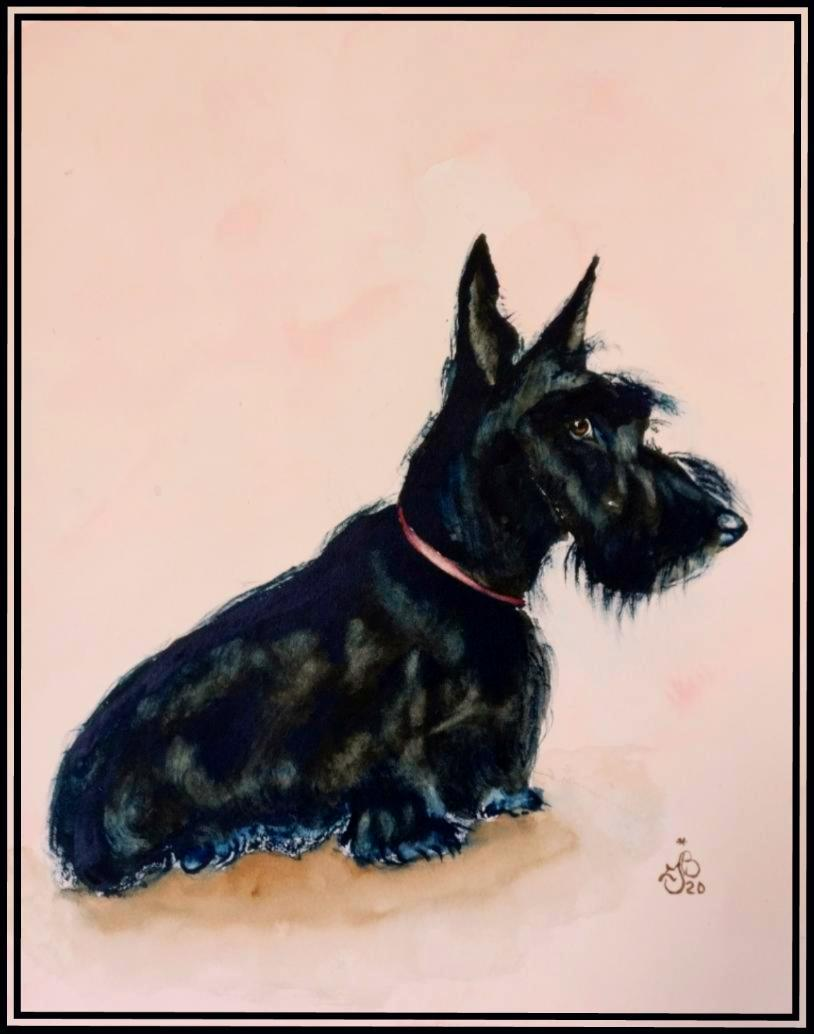 Scottisch terrier 1