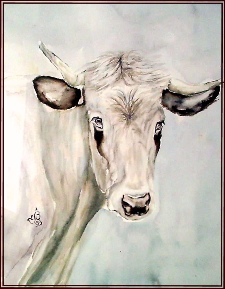Vache pyrenées